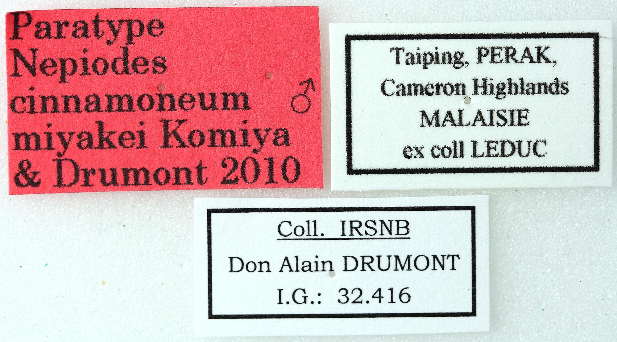 Nepiodes cinnamoneum miyakei 01 00 Paratype M-027 BRUS 201405.jpg