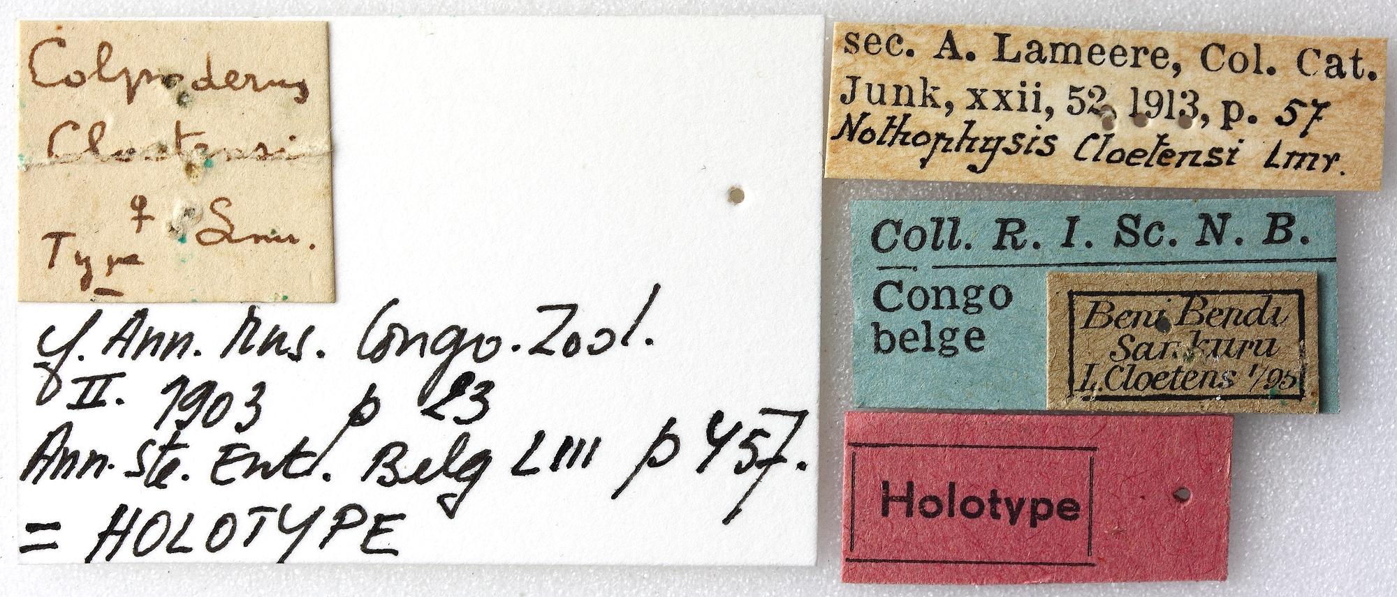 Notophysis cloetensi 01 00 Holotype F 040 BRUS 201405.jpg