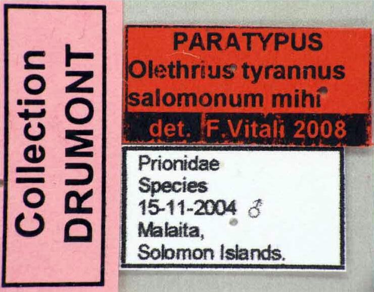 Olethrius tyrannus salomonum PT Male 46027cz30 label.jpg