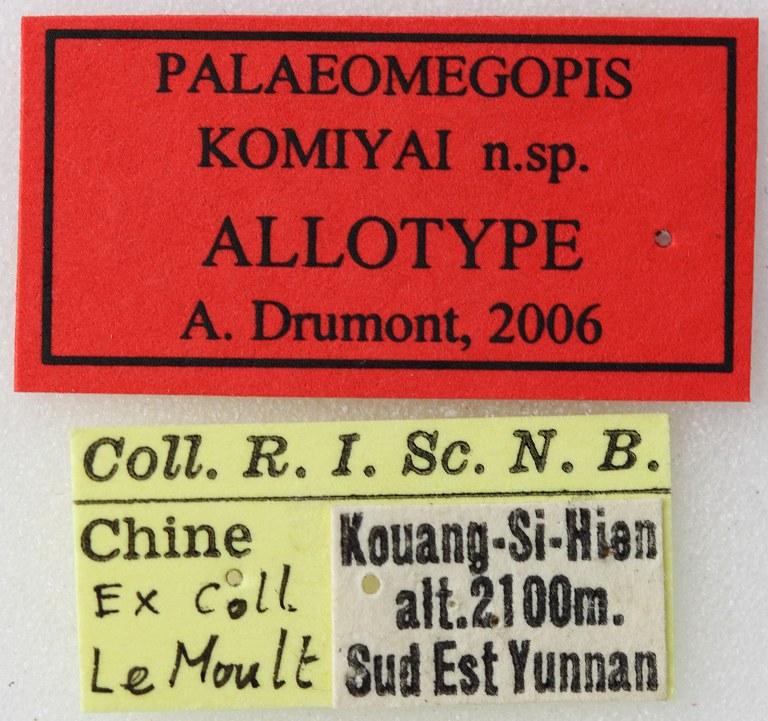 Palaeomegopis komiyai 02 00 Allotype F 041 BRUS 201405.jpg