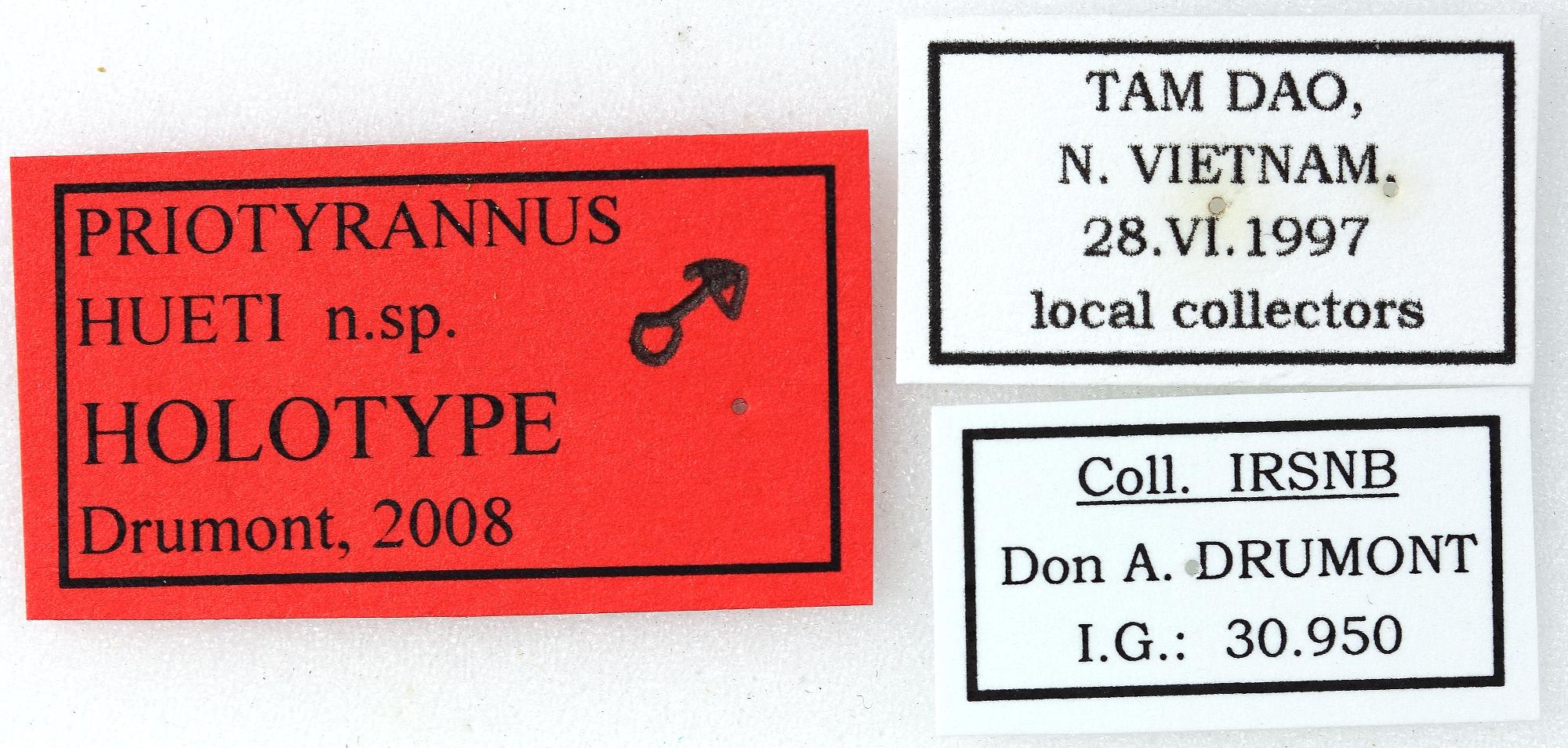 Priotyrannus hueti 01 00 Holotype M 041 BRUS 201405.jpg