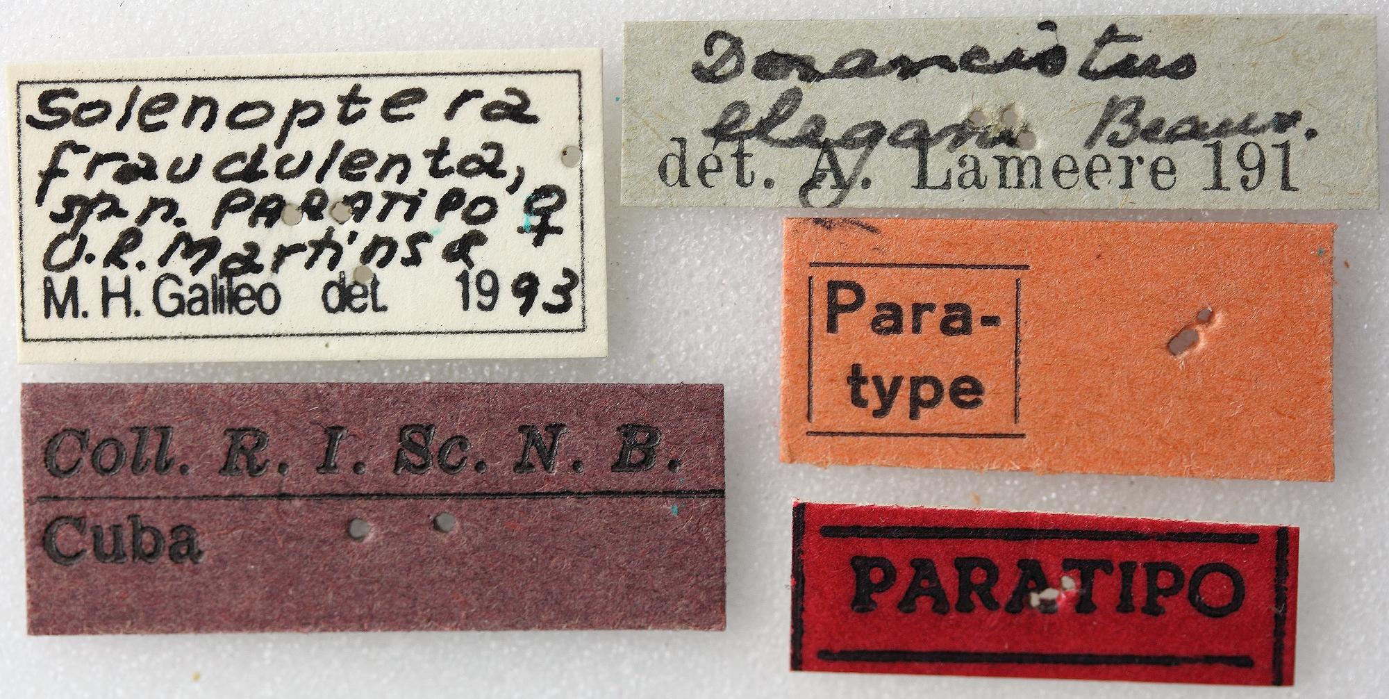 Solenoptera fraudulenta 03 00 Paratype F 022 BRUS 201405.jpg