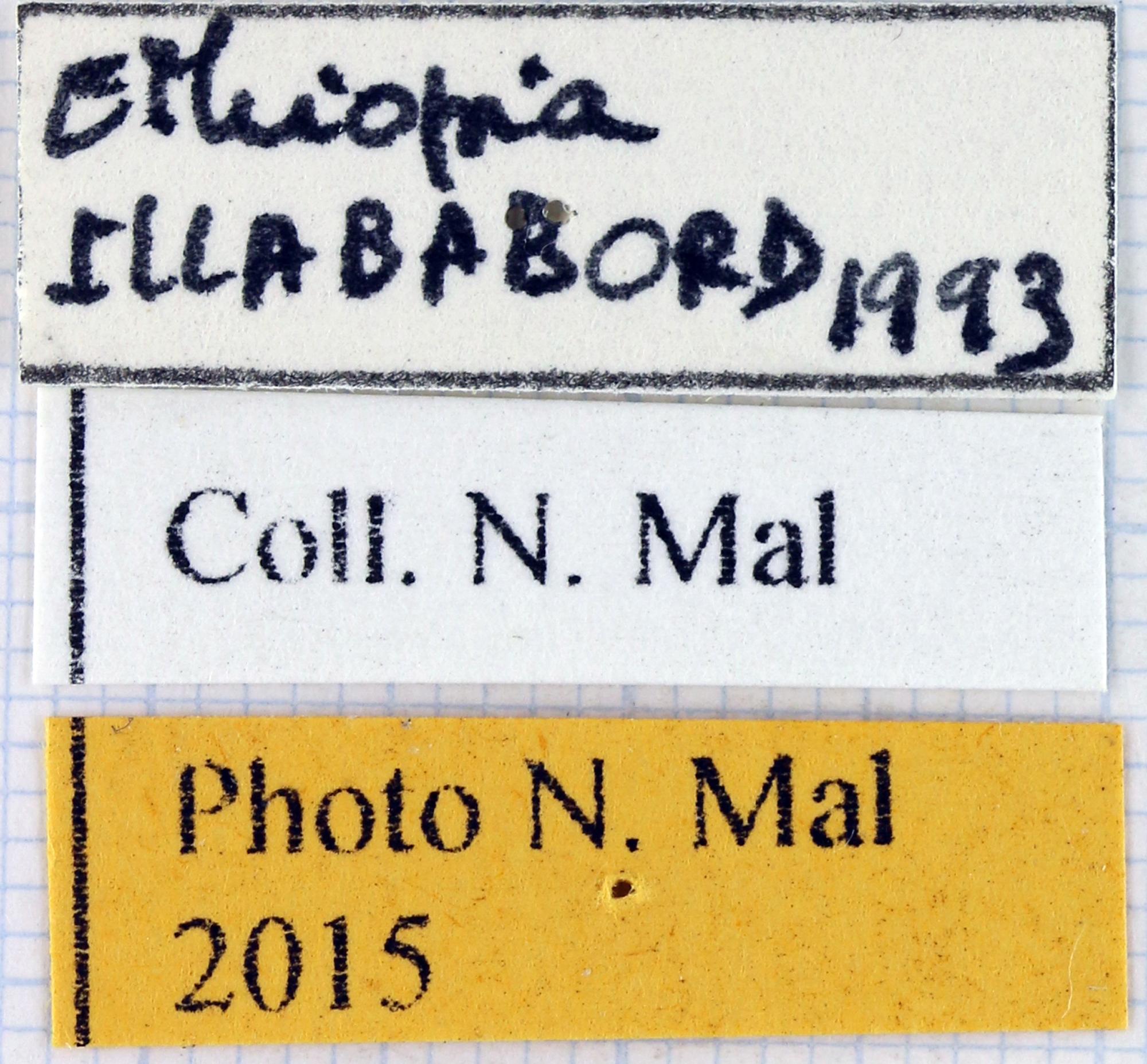 Compsocephalus dmitriewi dmitriewi label.jpg