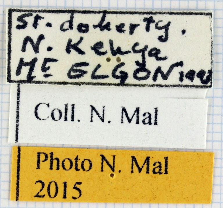 Compsocephalus dohertyi label.jpg