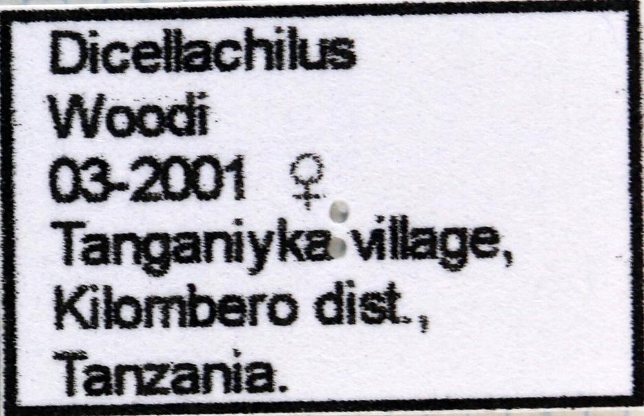 Dicellachilus woodi label 65997.jpg