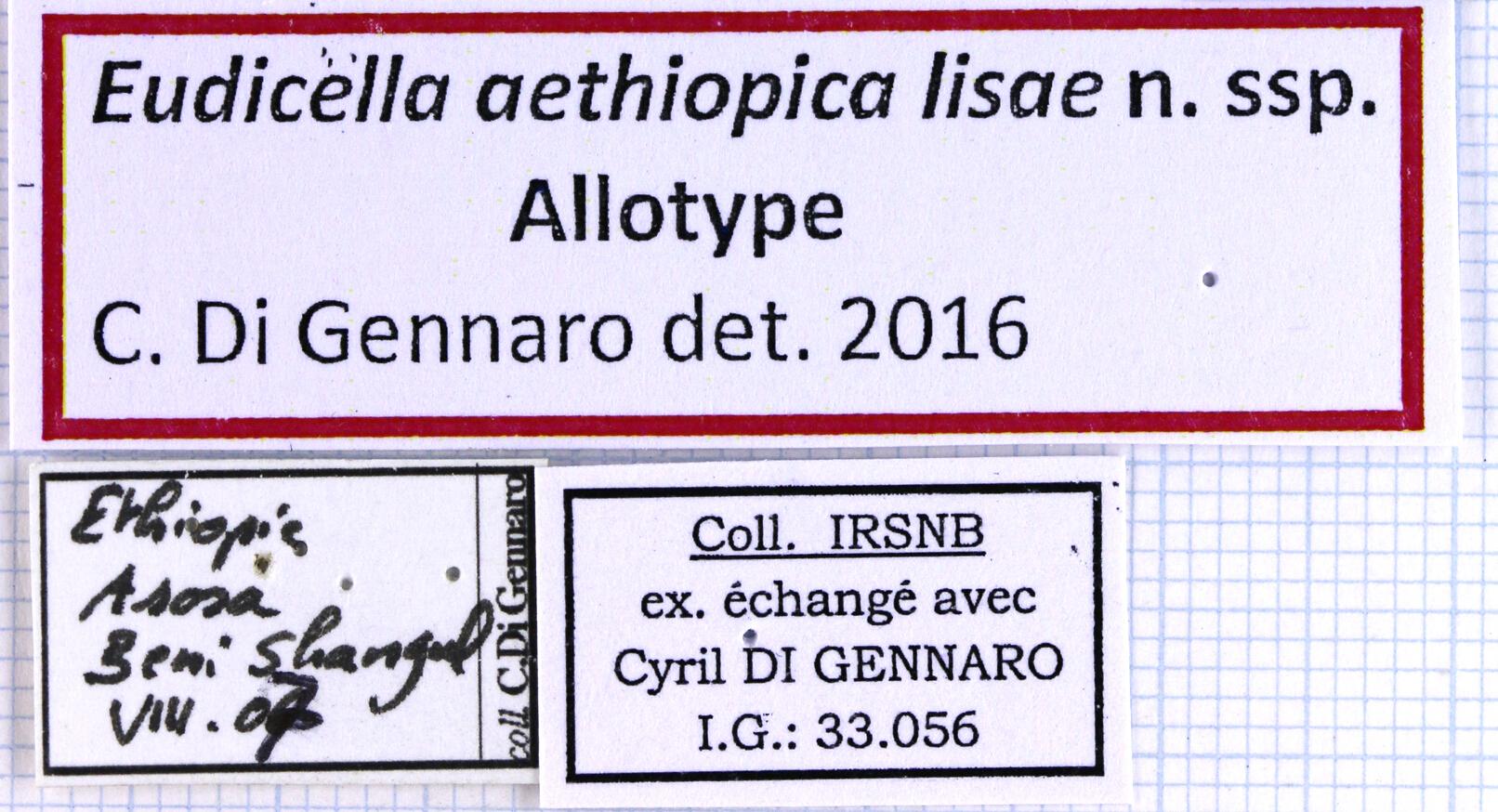 Eudicella aethiopica lisae label 49932.jpg