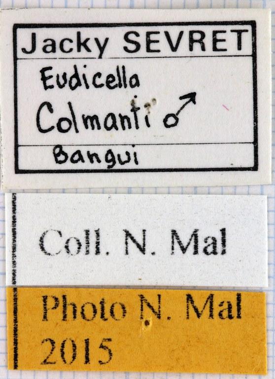 Eudicella colmanti label.jpg