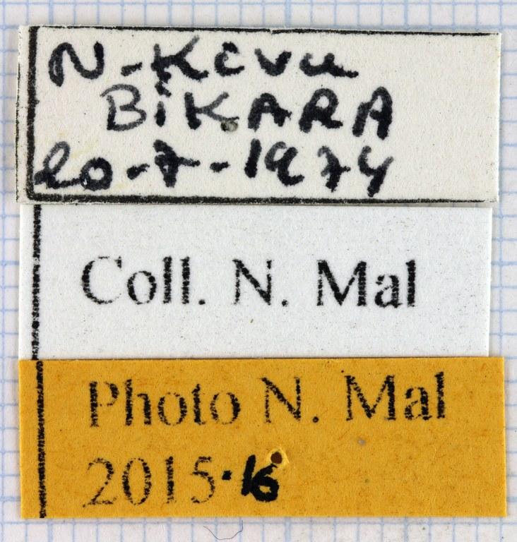 Eudicella cupreosuturalis label.jpg