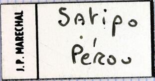 Golinca bifrons Label.jpg