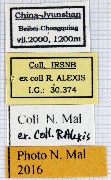 Neophaedimus auzouxi lab.jpg