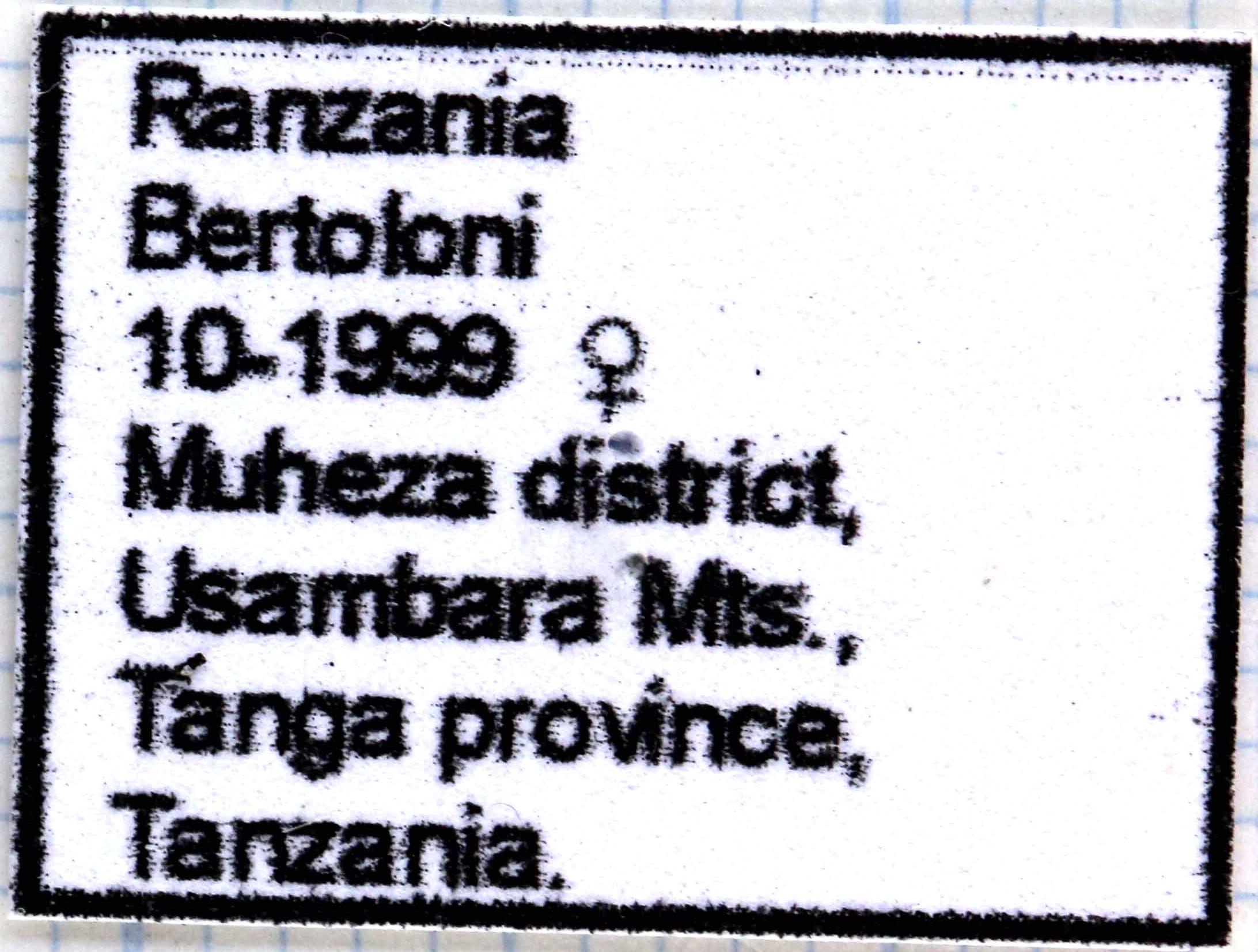 Rhamphorrhina bertolonii 64353 female.jpg