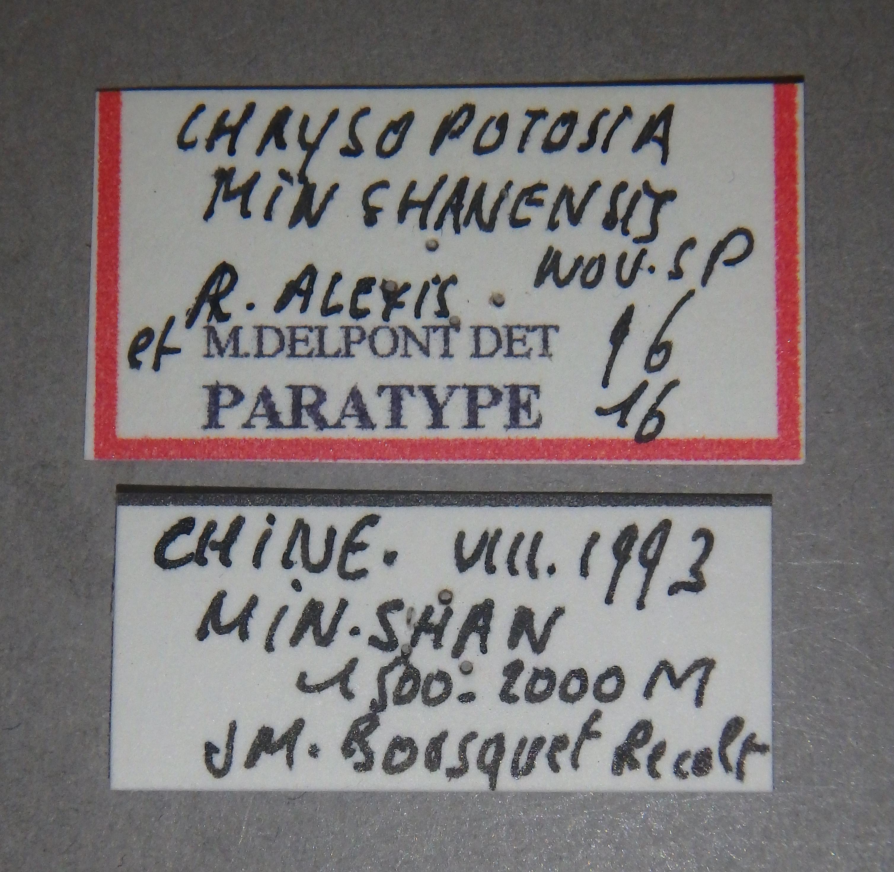 Chrysopotosia minshanensis pt2 Lb.JPG