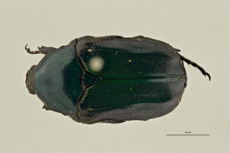 Euphoria holochloris pt D ZS PMax Scaled.jpeg