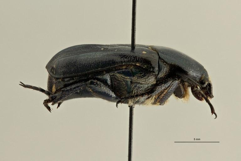 Euphoria holochloris pt L ZS PMax Scaled.jpeg
