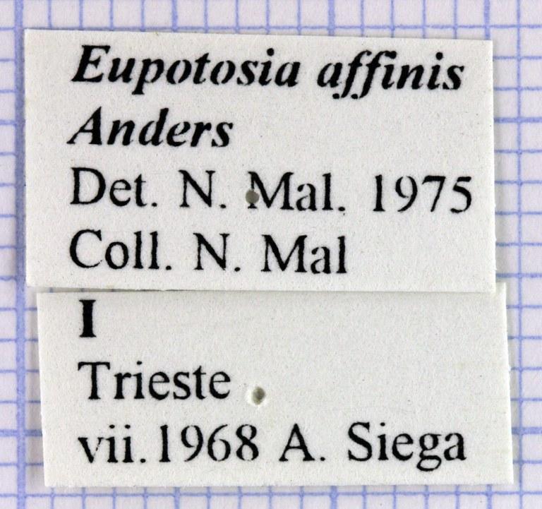 Eupotosia affinis affinis 28632.jpg