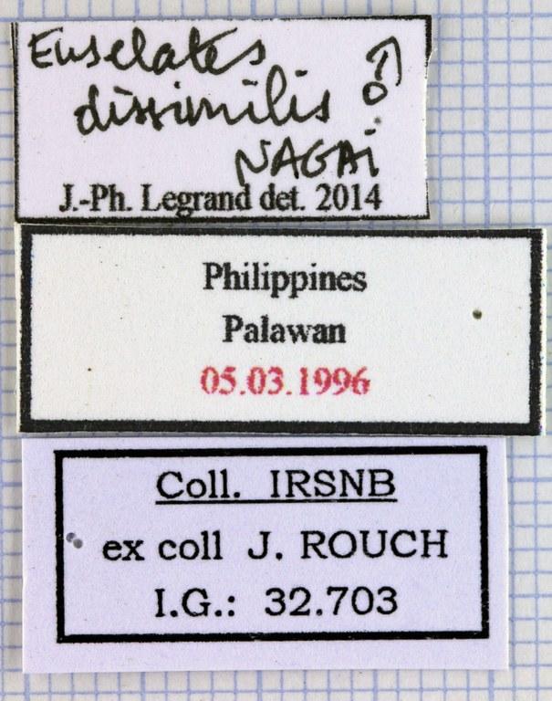 Euselates dissimilis lables 21896.jpg
