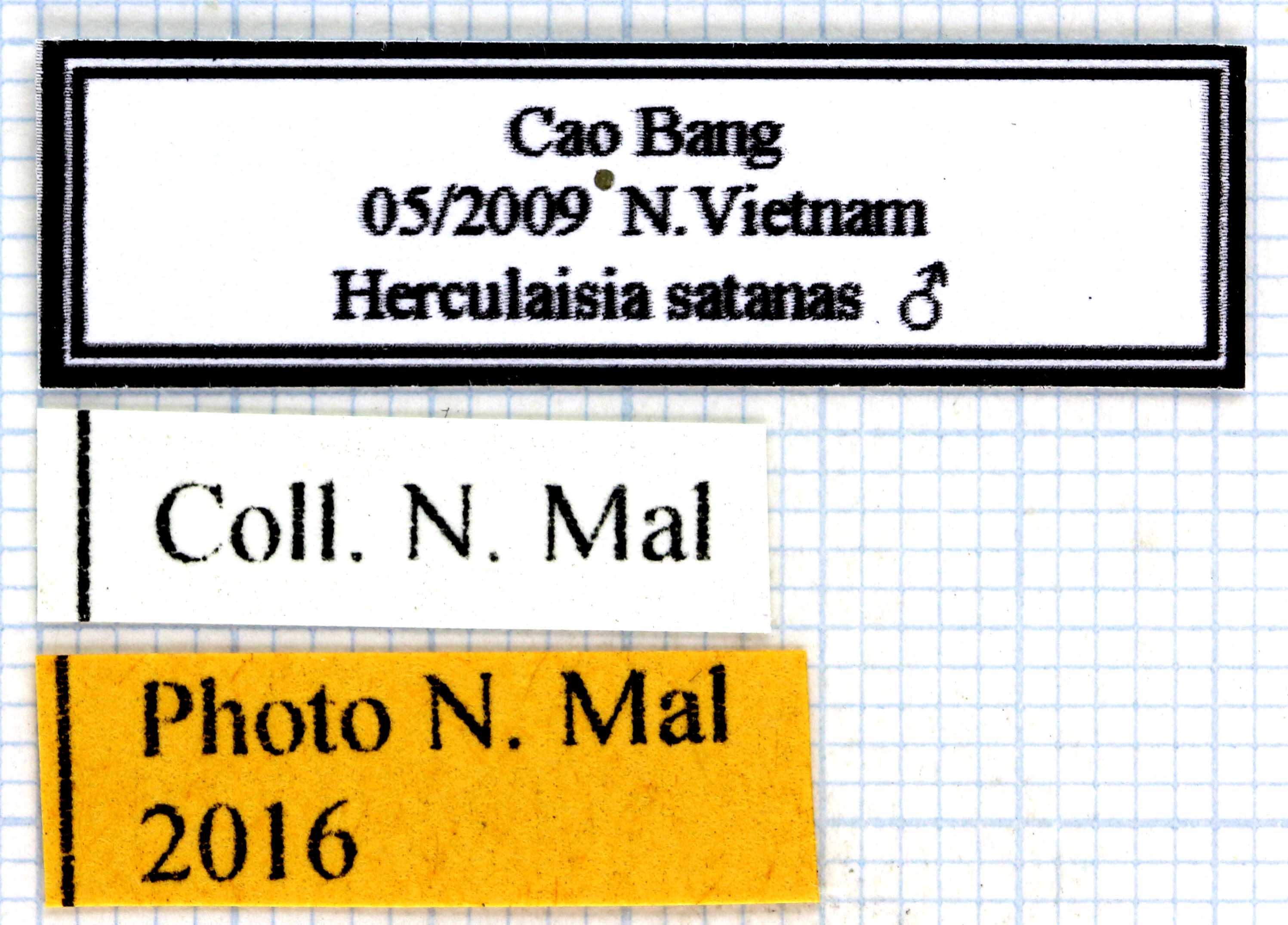 Herculaisia satanas lables 64224.jpg