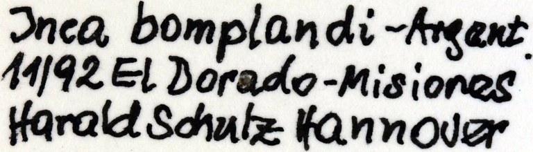 Inca bonplandi lables 24084.jpg