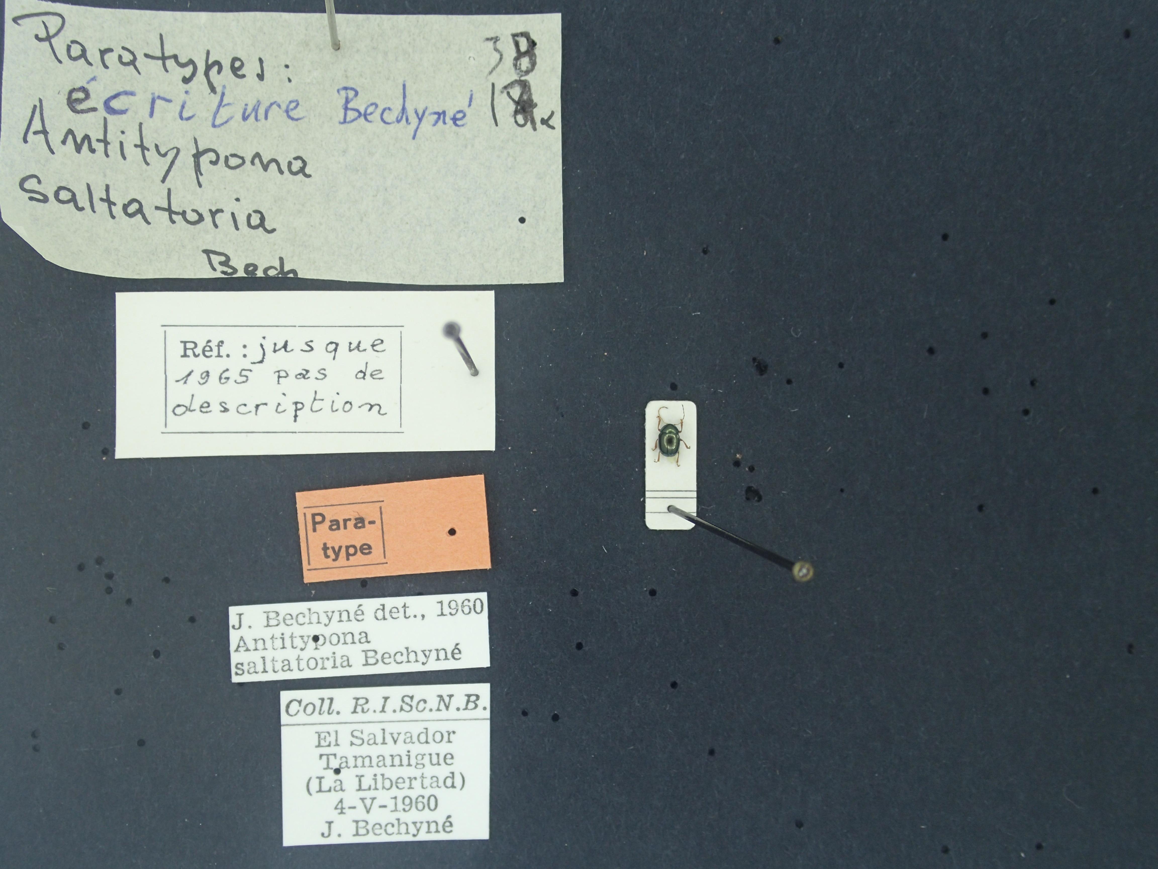 BE-RBINS-ENT Antitypona saltatoria K30_D01_009 Label.jpg