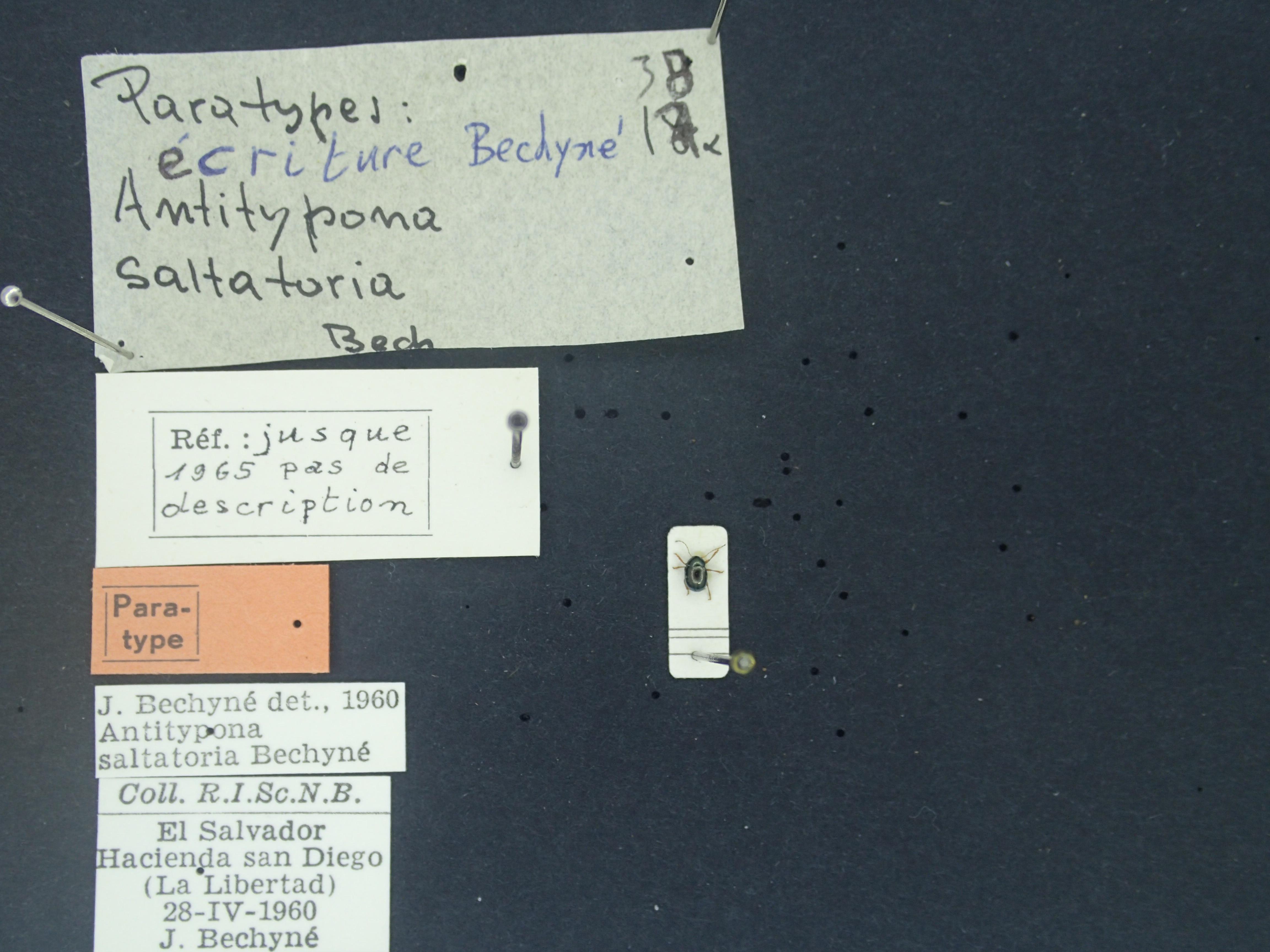 BE-RBINS-ENT Antitypona saltatoria K30_D01_051 Label.JPG