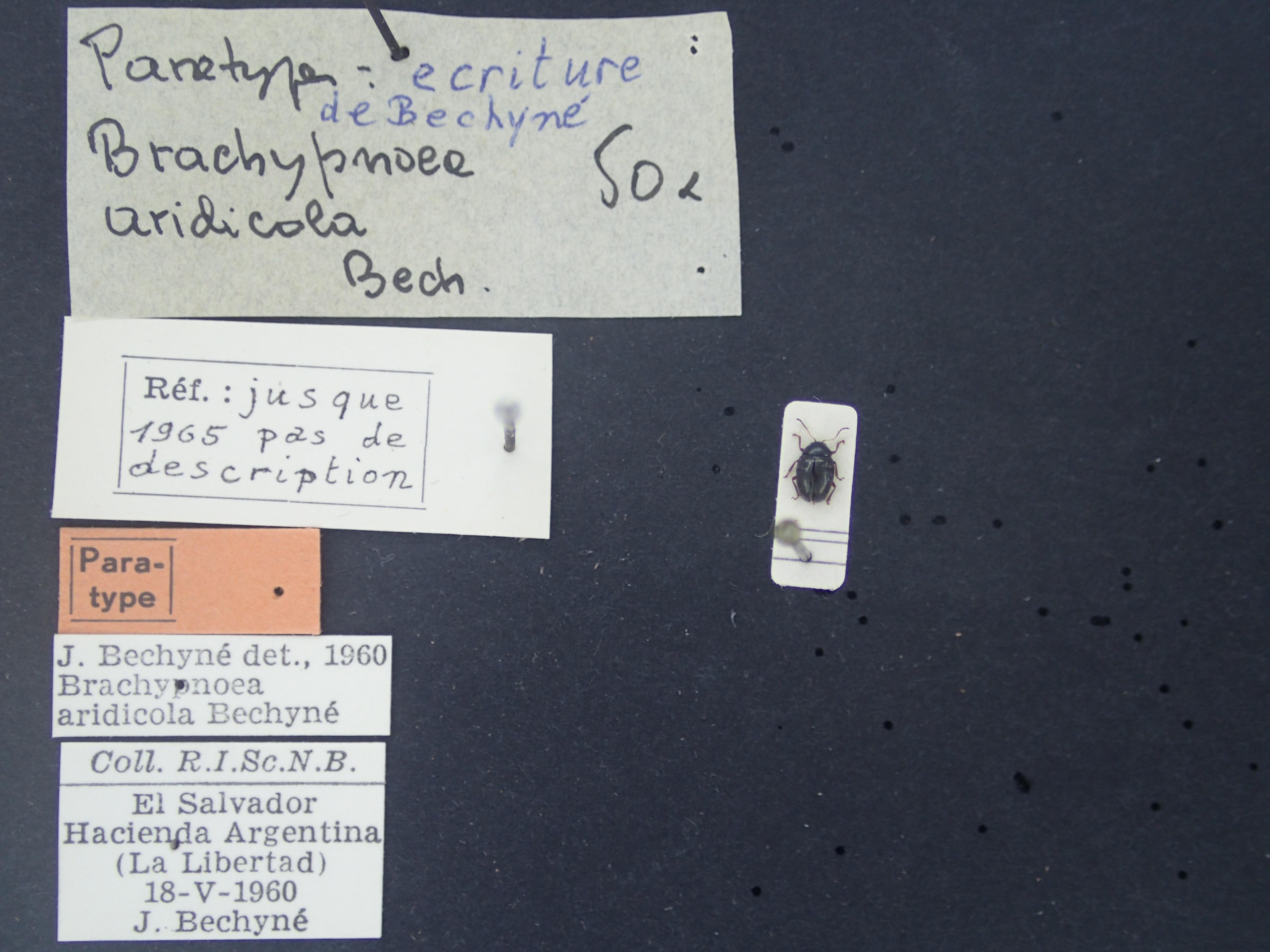 BE-RBINS-ENT Brachypnoea aridicola K30_D01_074 Label.JPG
