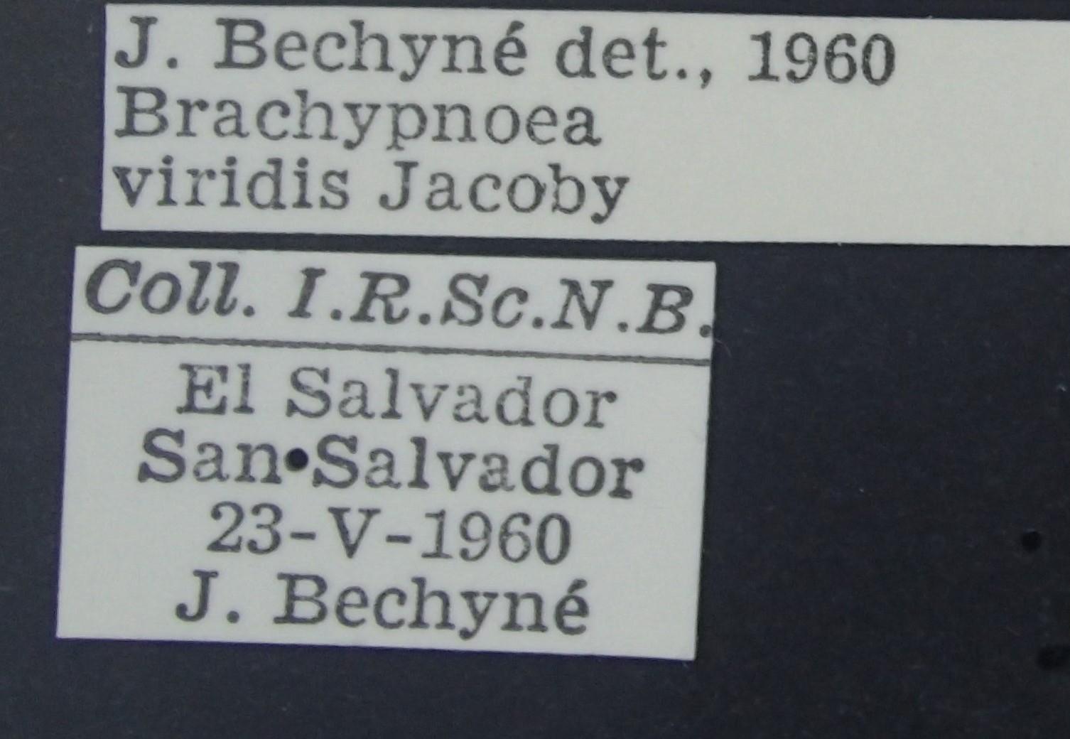 BE-RBINS-ENT Brachypnoea viridis K30_D02_137 Label.JPG