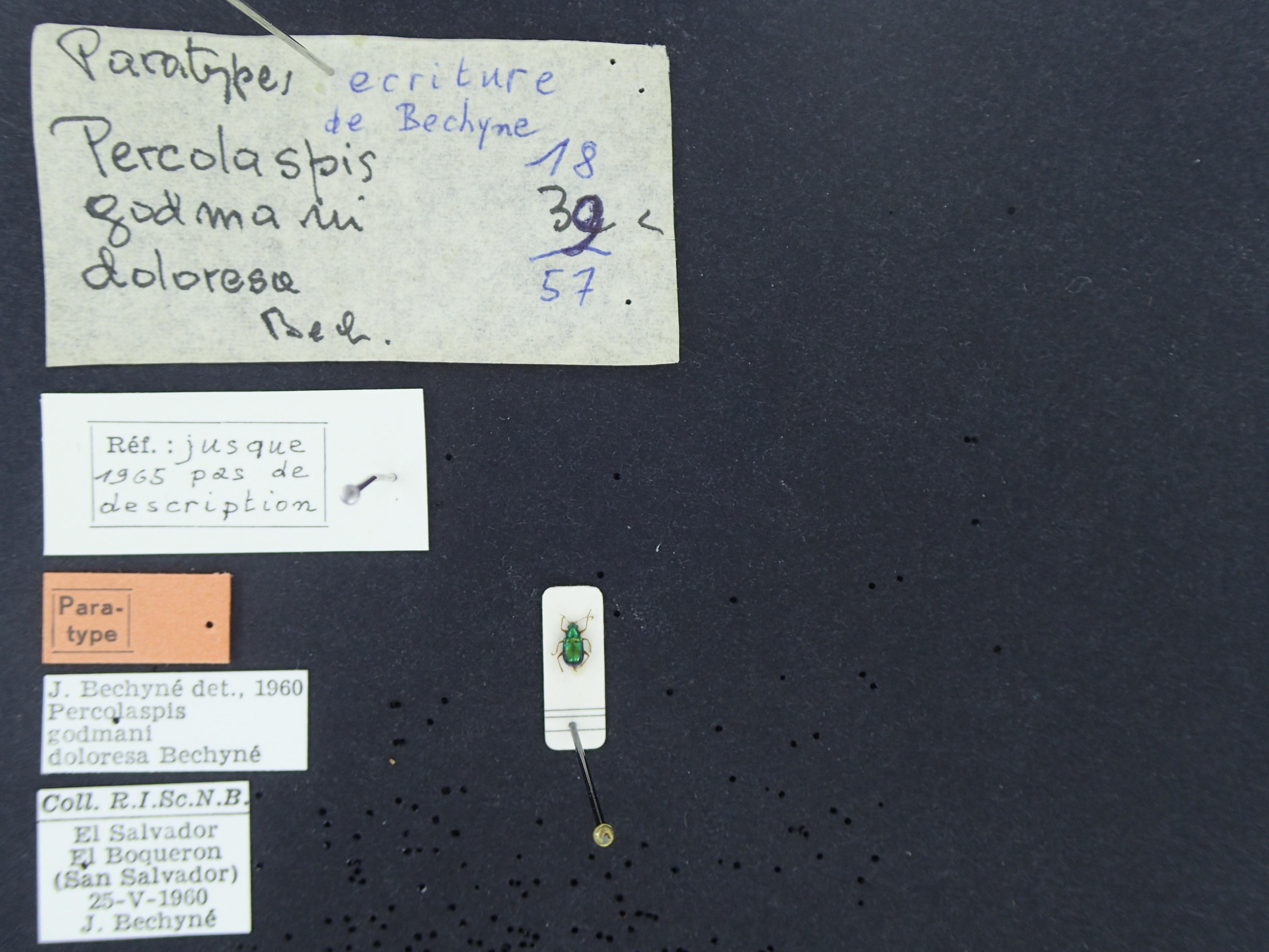 BE-RBINS-ENT Percolaspis godmani doloresa K30_D04_042 Label.JPG