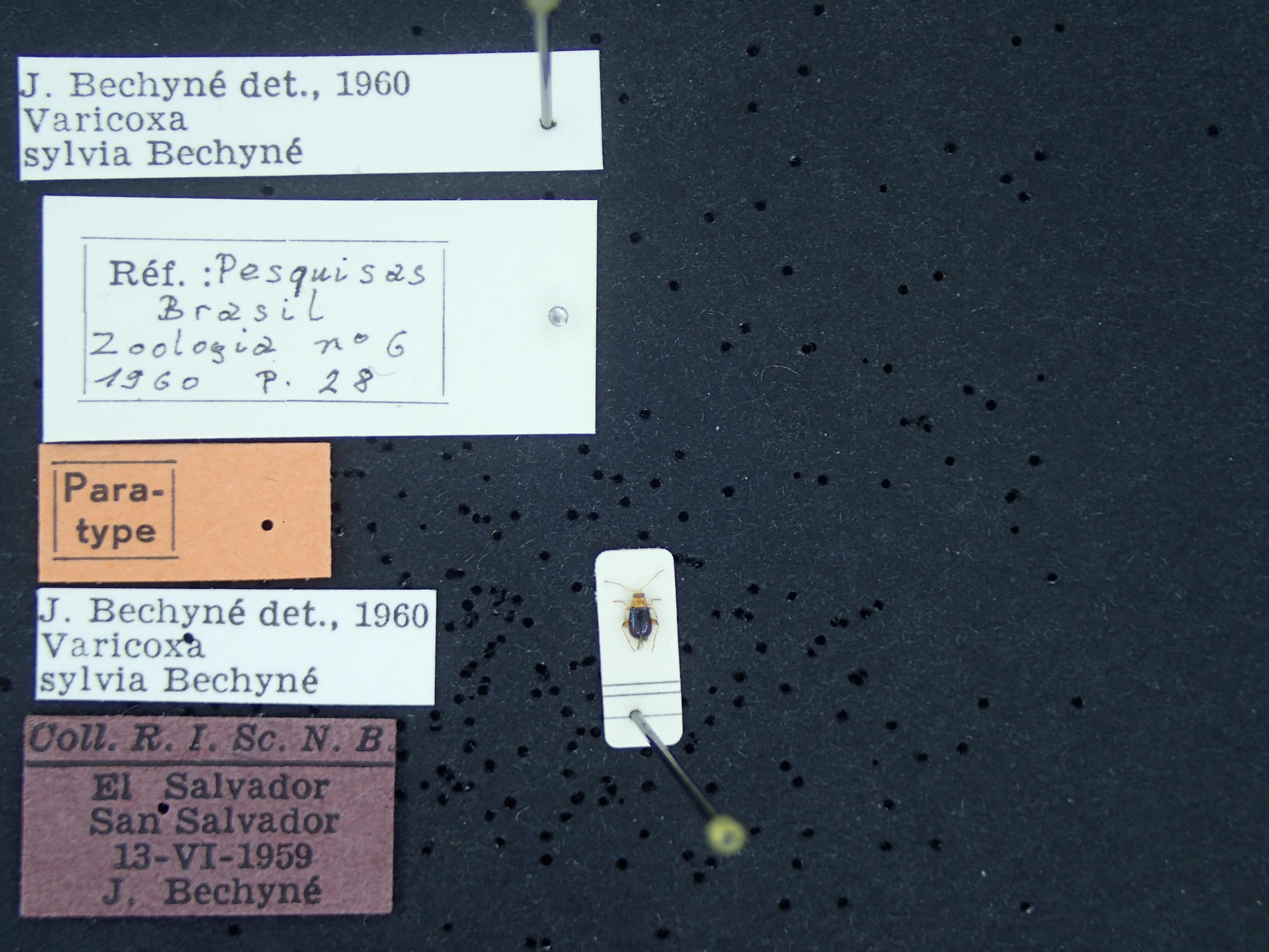 BE-RBINS-ENT varicoxa sylvia K39_D10_100 Label.JPG