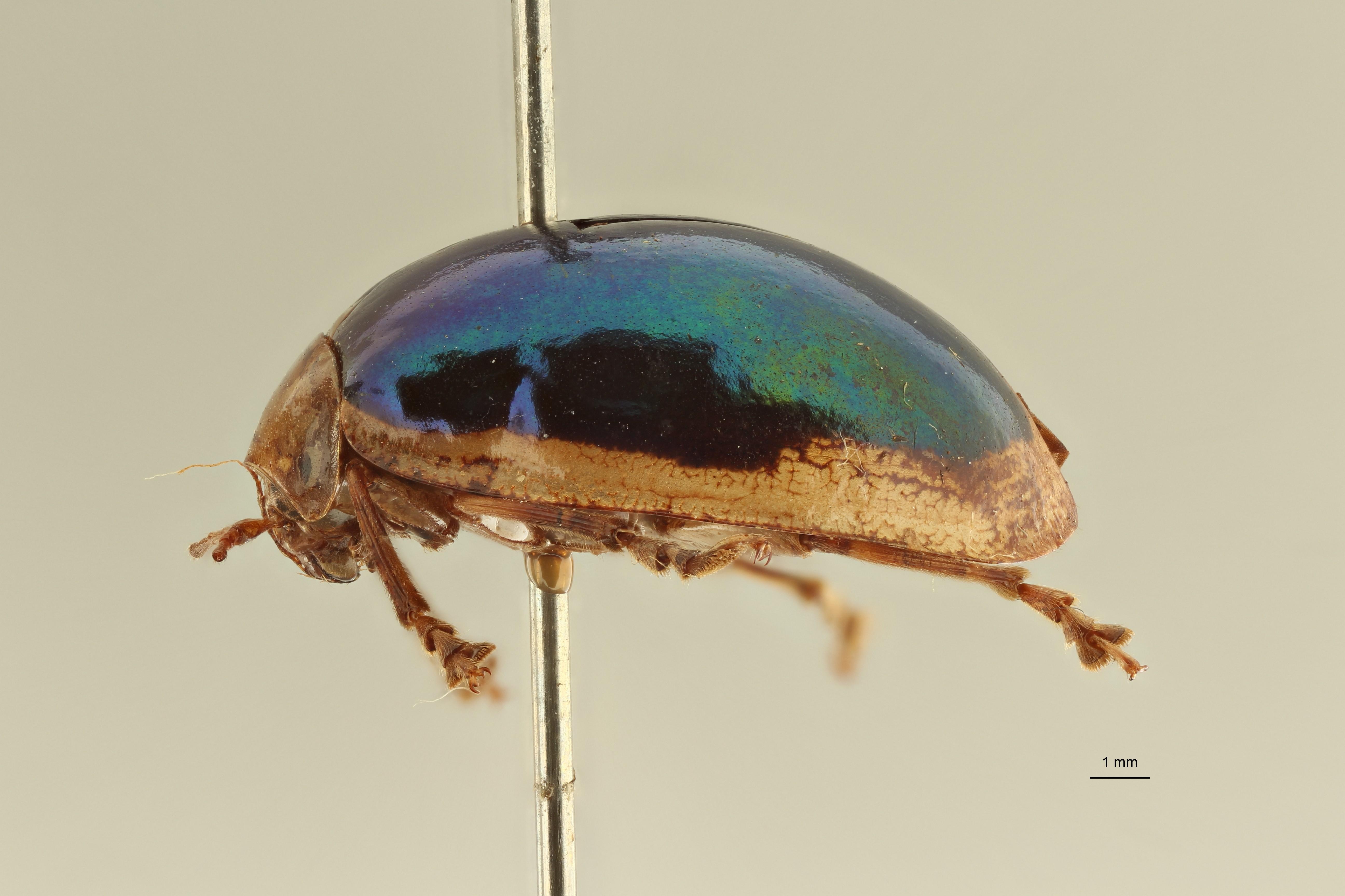 Oides elegans pt1 L ZS PMax Scaled.jpeg