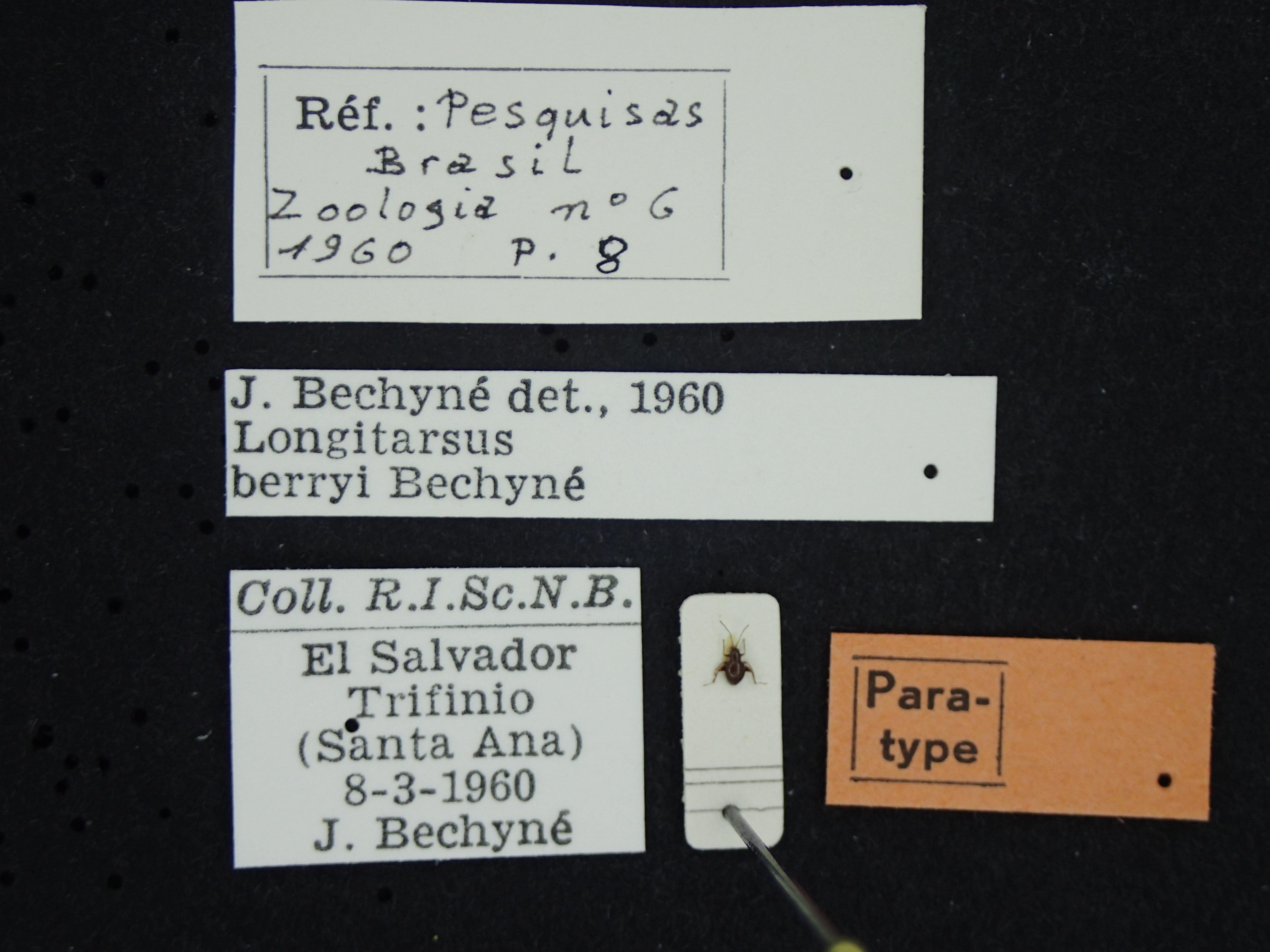 BE-RBINS Longitarsus berryi K39_D06_108 Label.JPG