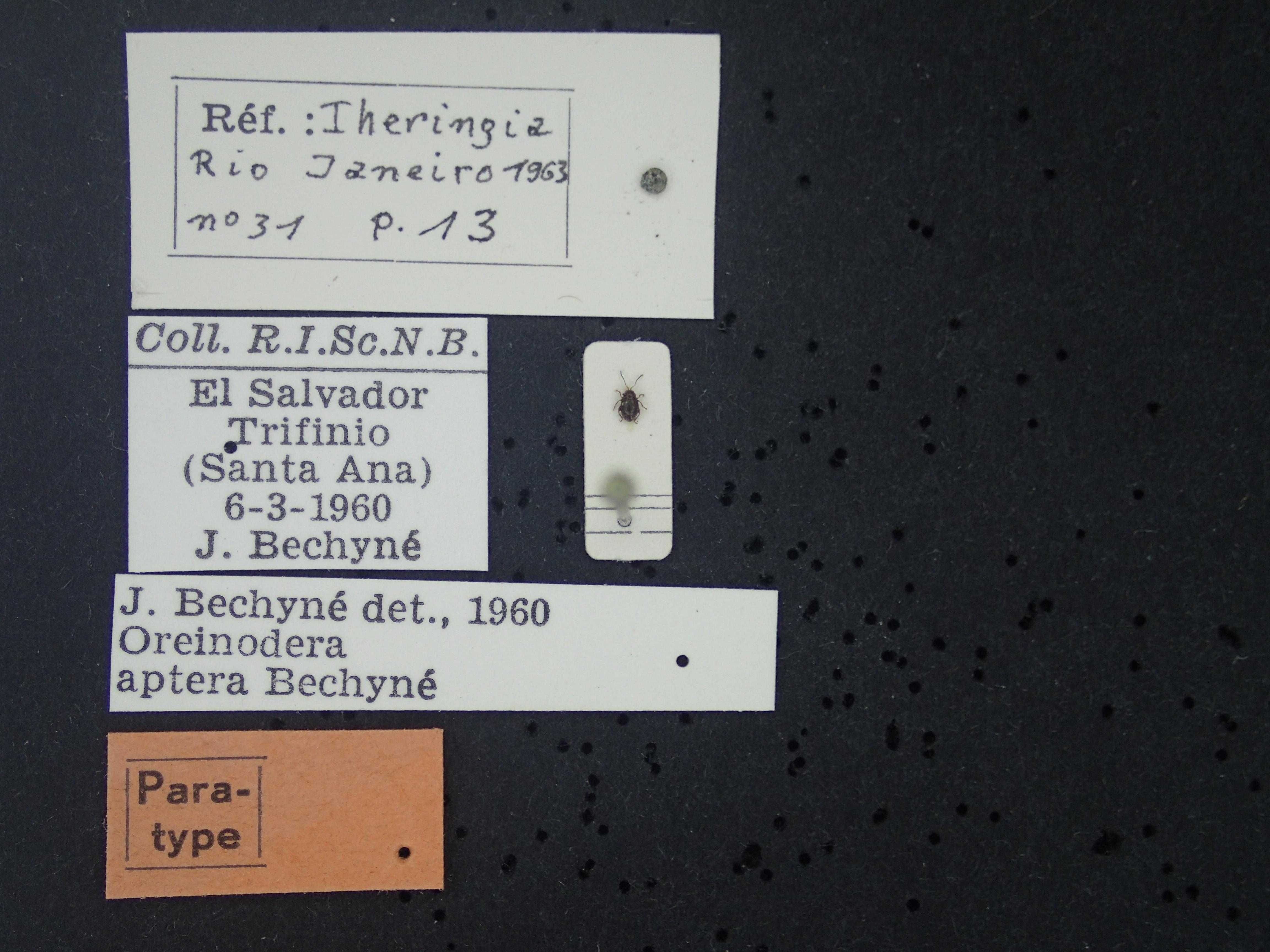BE-RBINS-ENT Lupraea portilloi K39_D07_091 Label.JPG