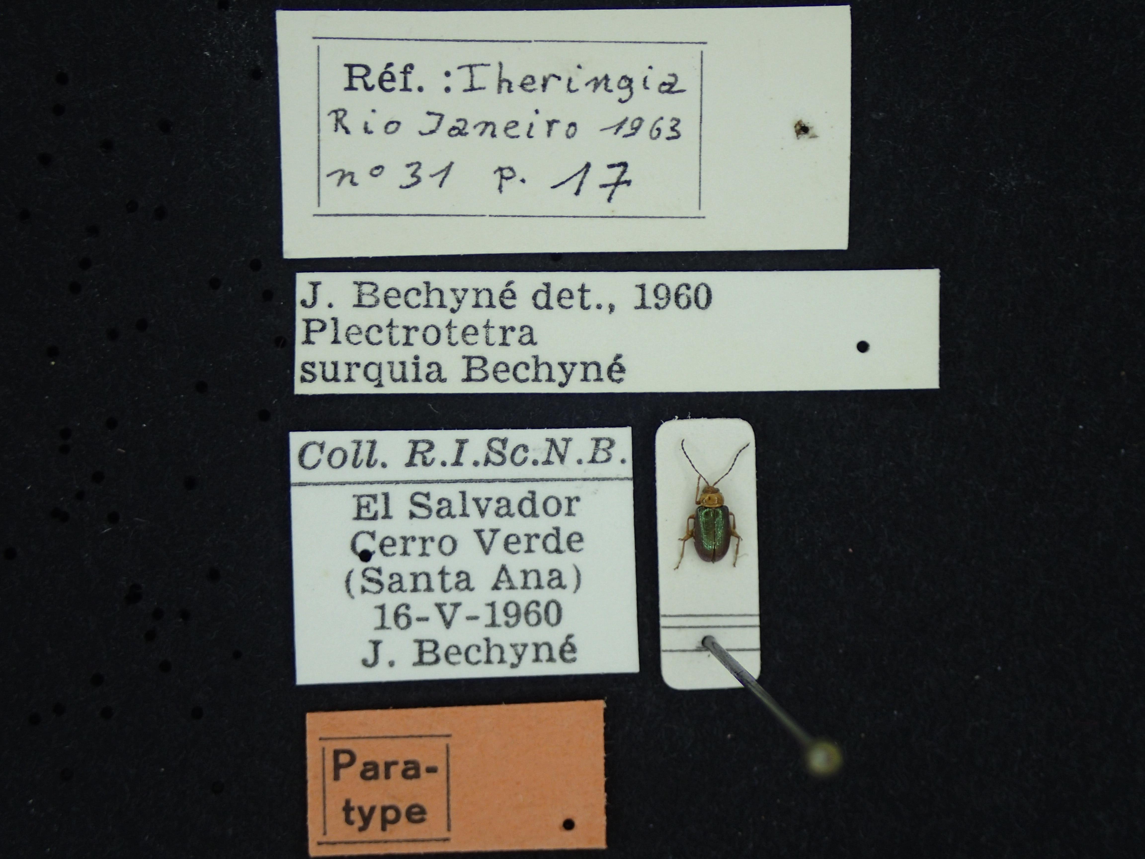 BE-RBINS-ENT Plectotetra surquia  K39_D08_123 Label.JPG
