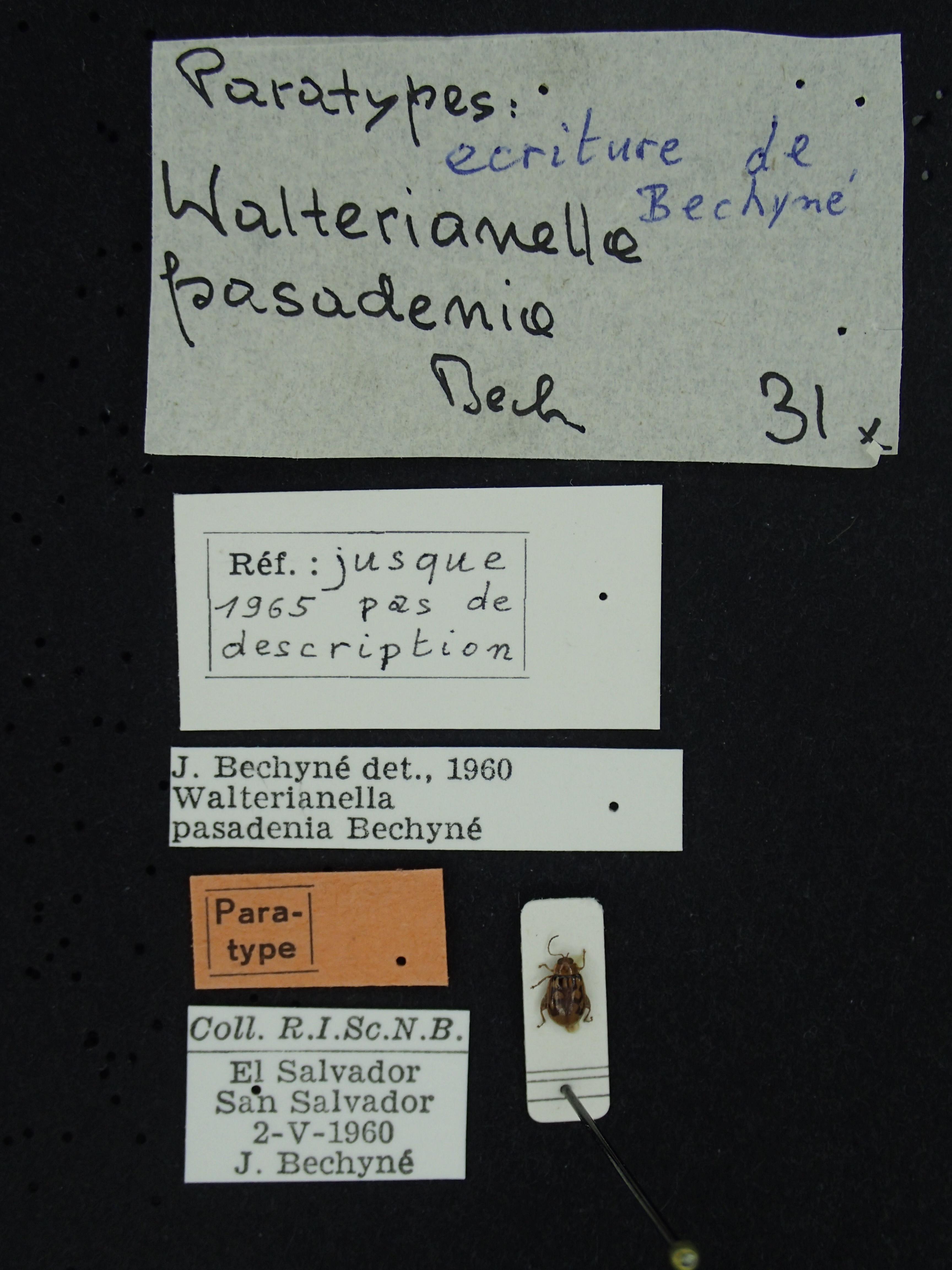 BE-RBINS-ENT Walterianella pasadenia K39_D11_001 Label.JPG