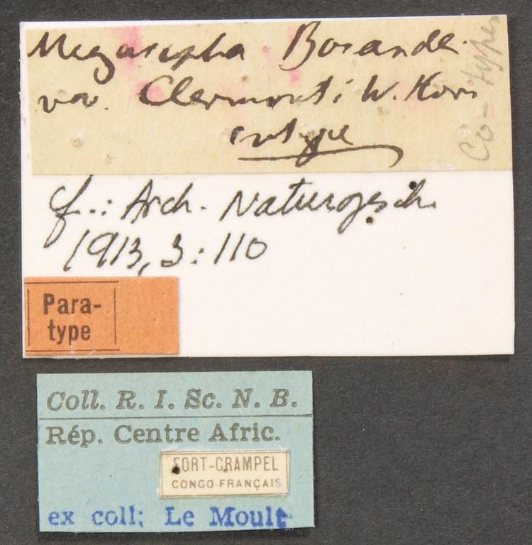 Megacephala (Megacephala) bocandei clemonti pt LB.JPG
