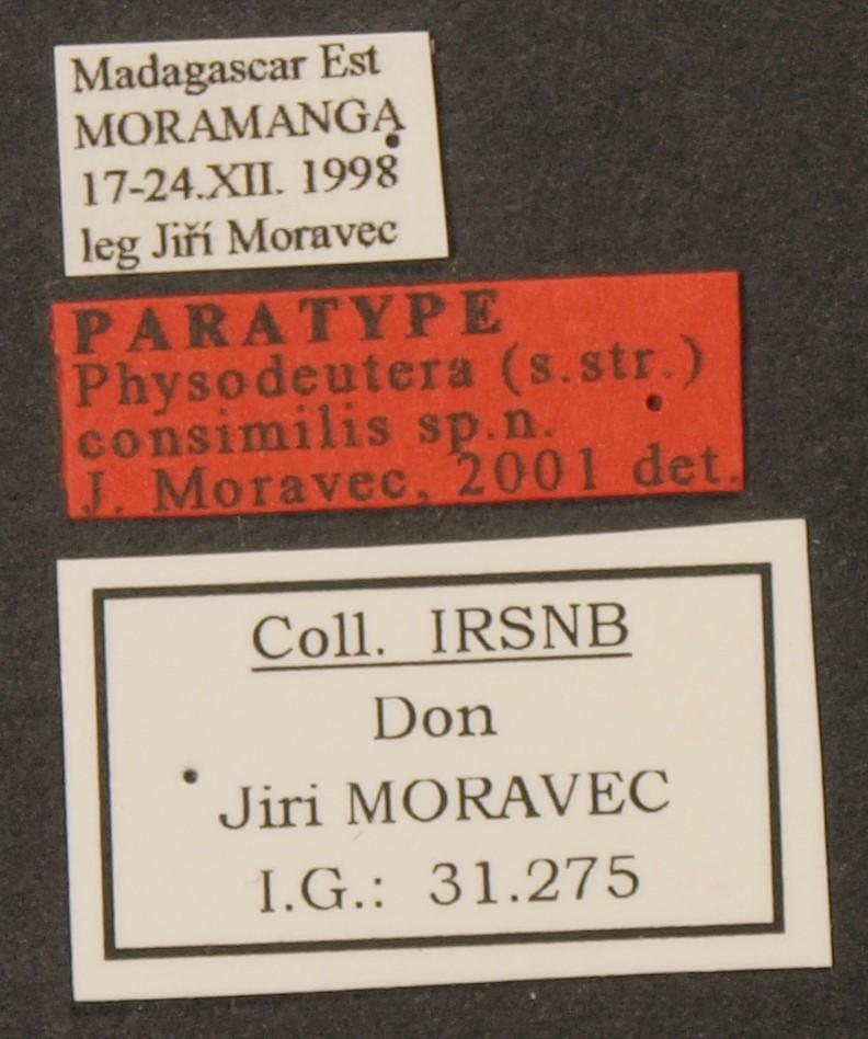 Physodeutera (Physodeutera) consimilis pt LB.JPG