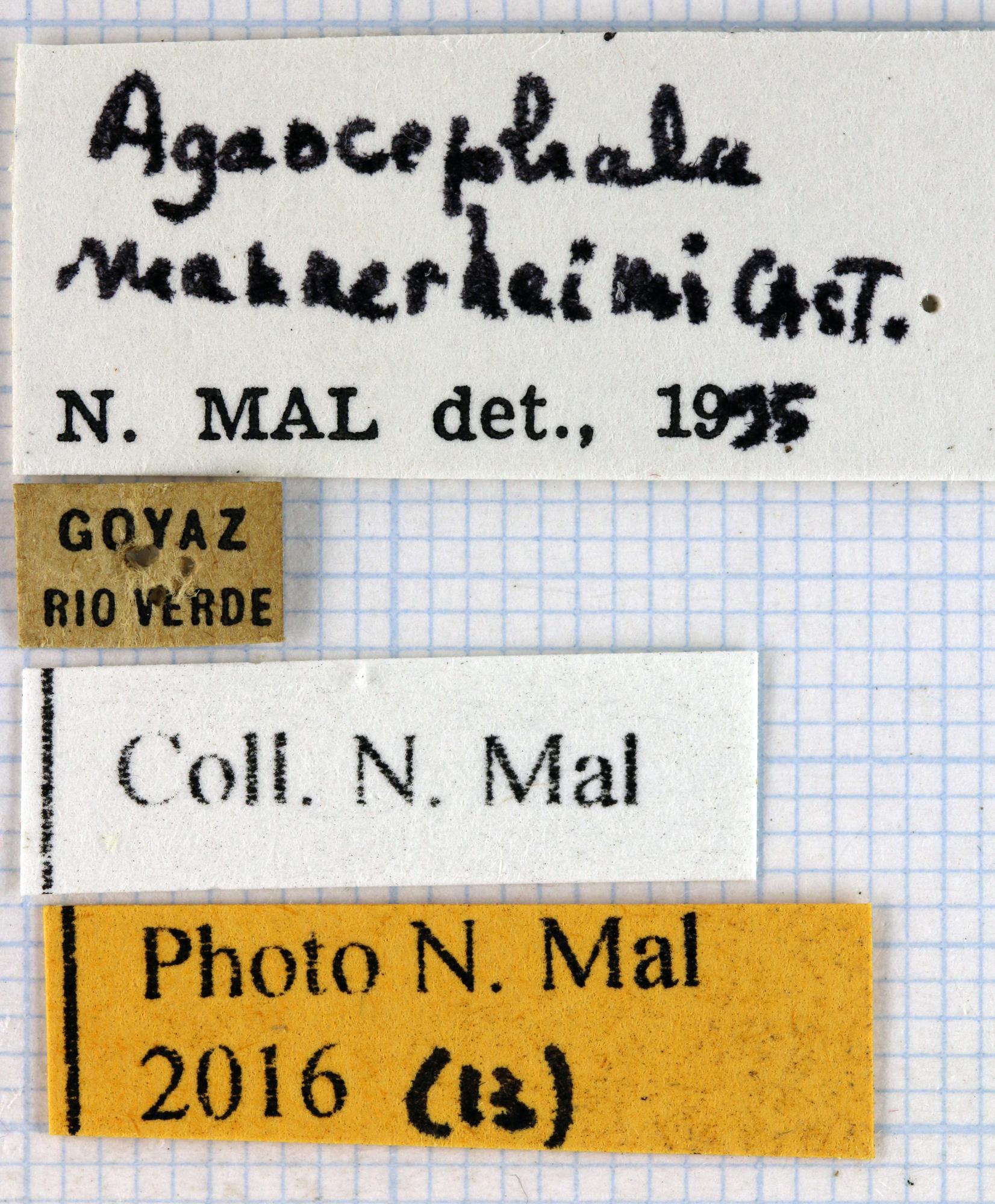 Agaocephala mannerheimi label 66657.jpg
