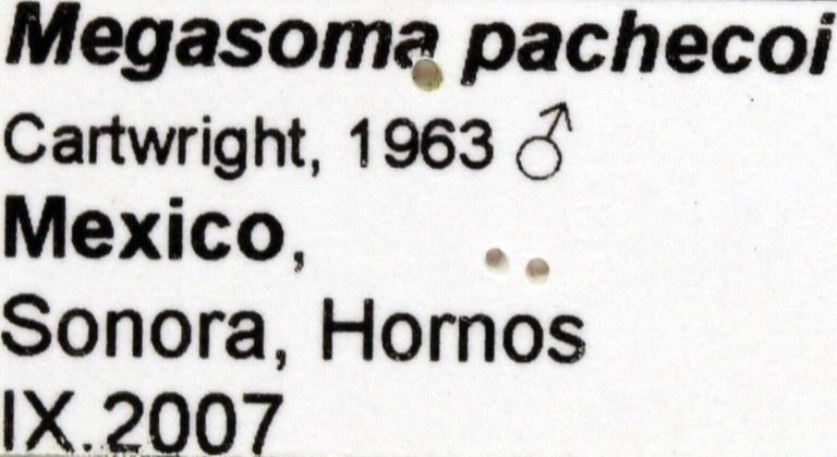 Megasoma pachecoi label 67673.jpg