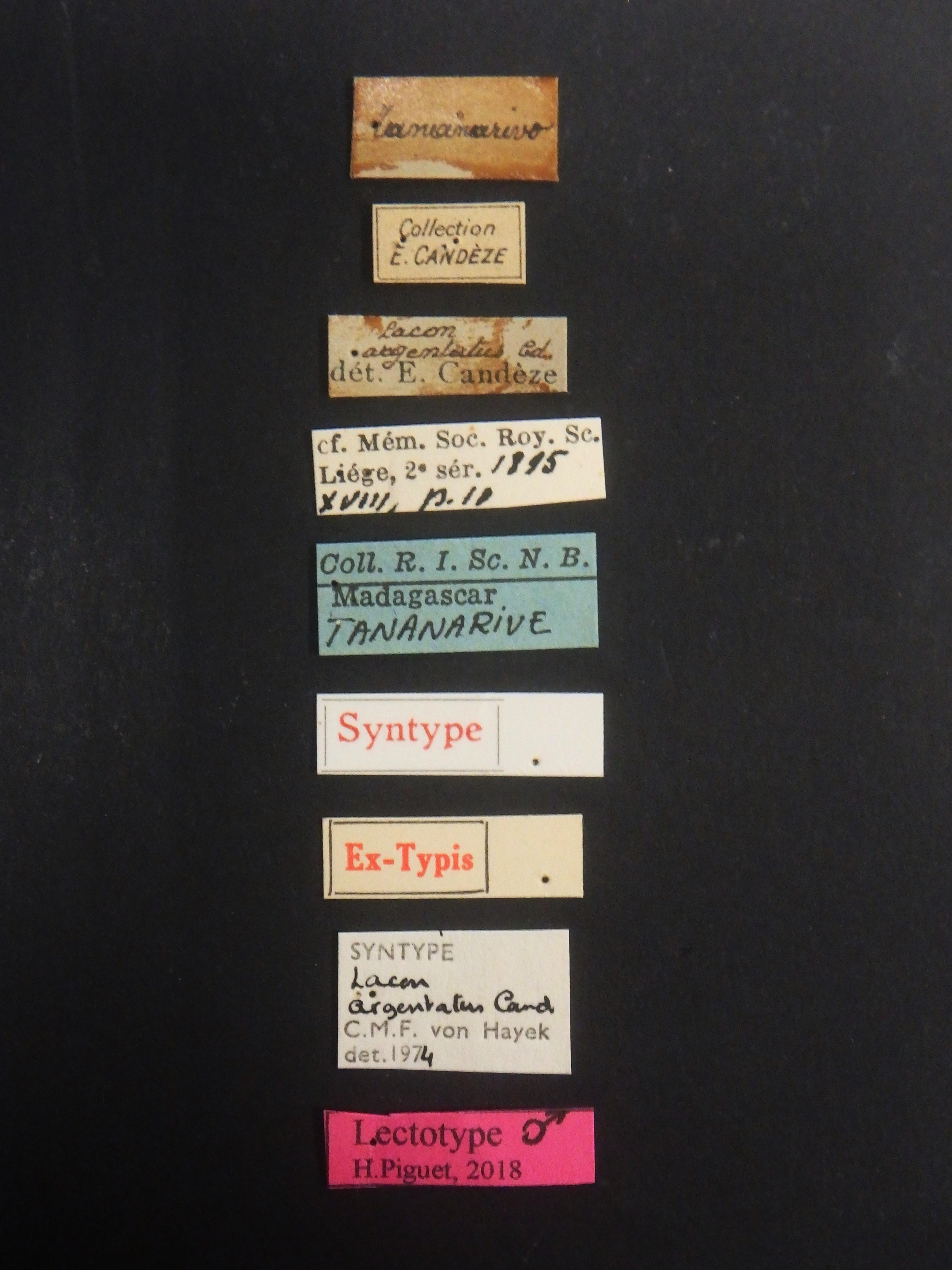 Lacon argentatus lt Labels.JPG