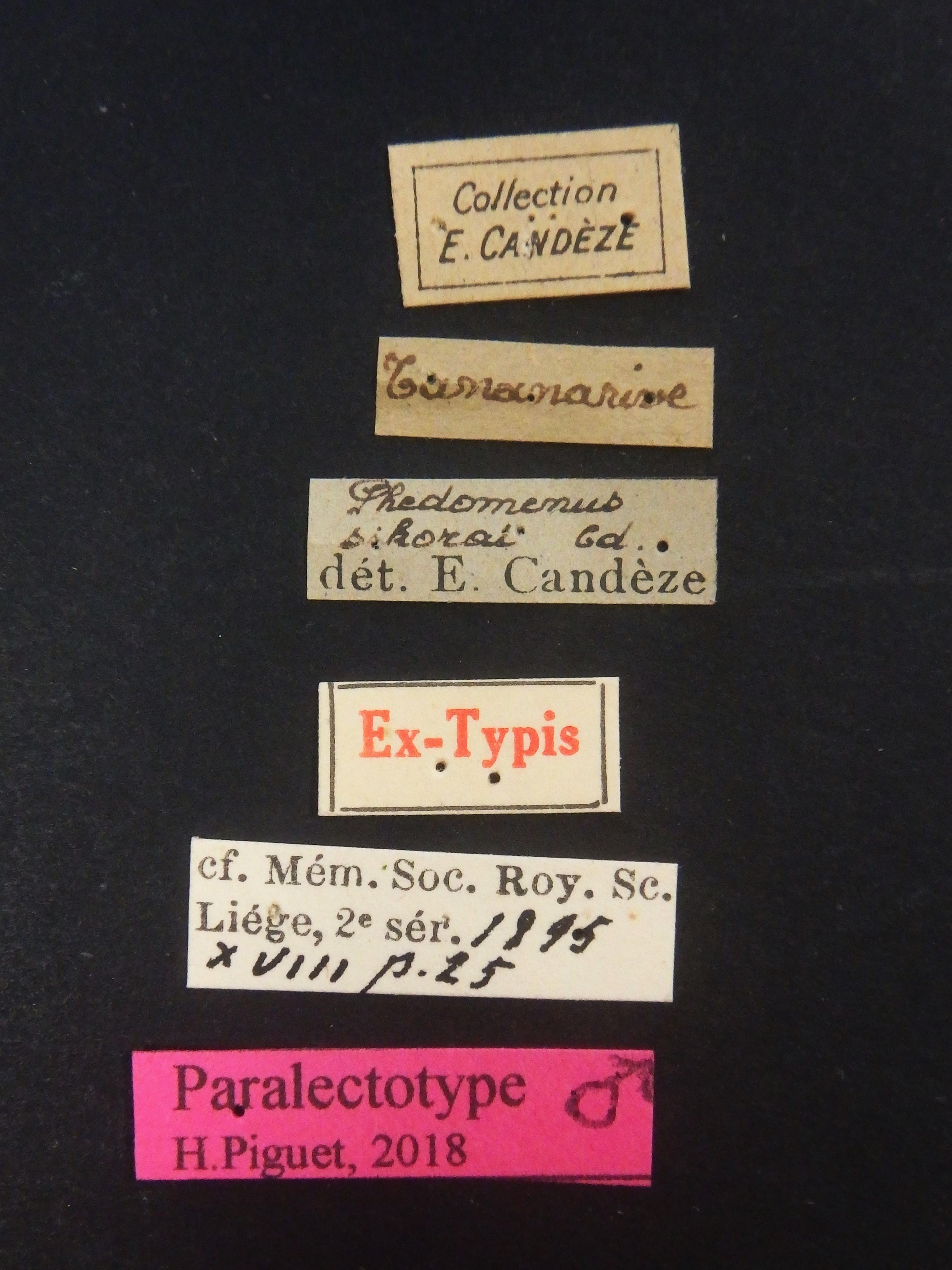 Phedomenus sikorae plt Labels.JPG