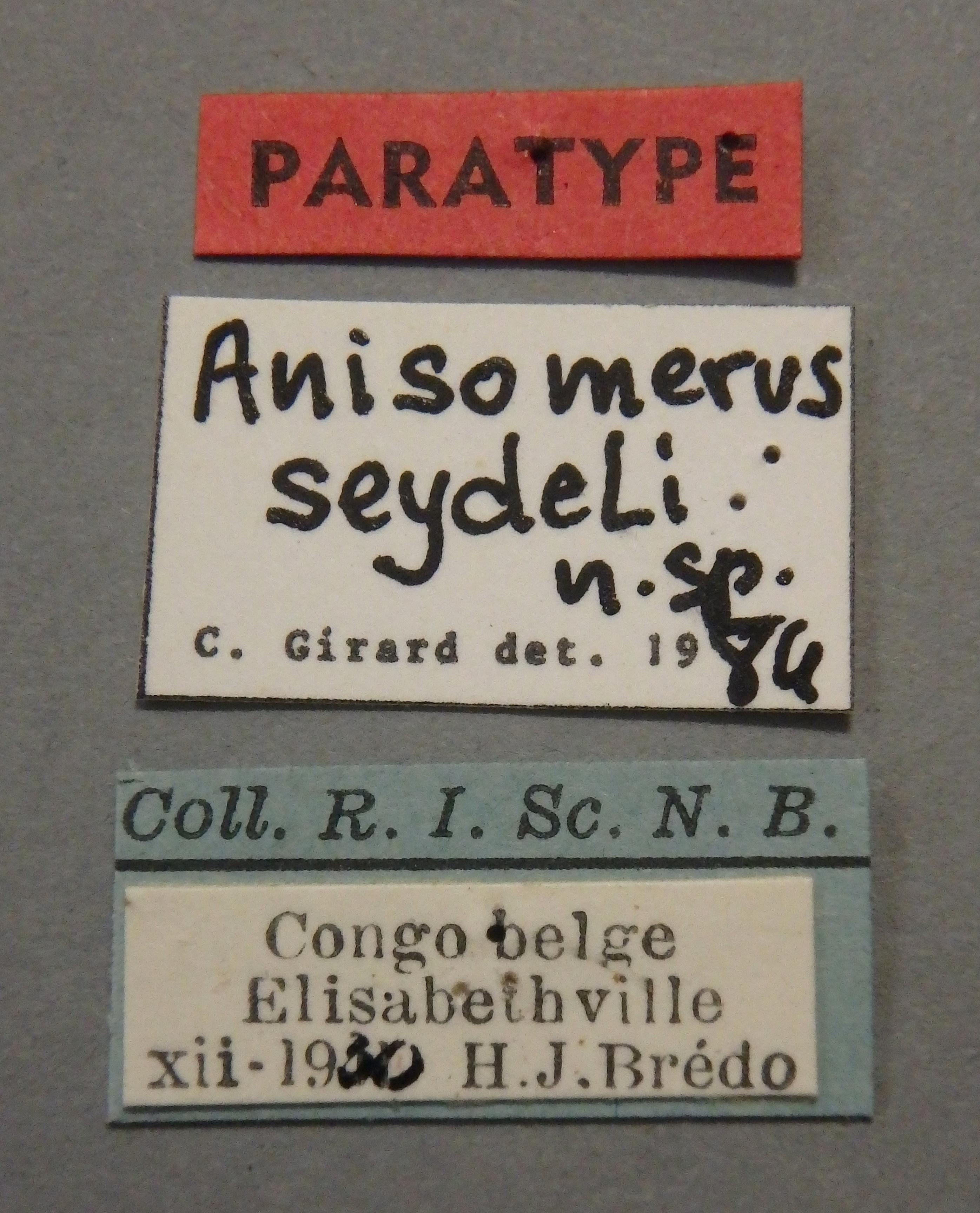 Anisomerus seydeli pt Lb.JPG