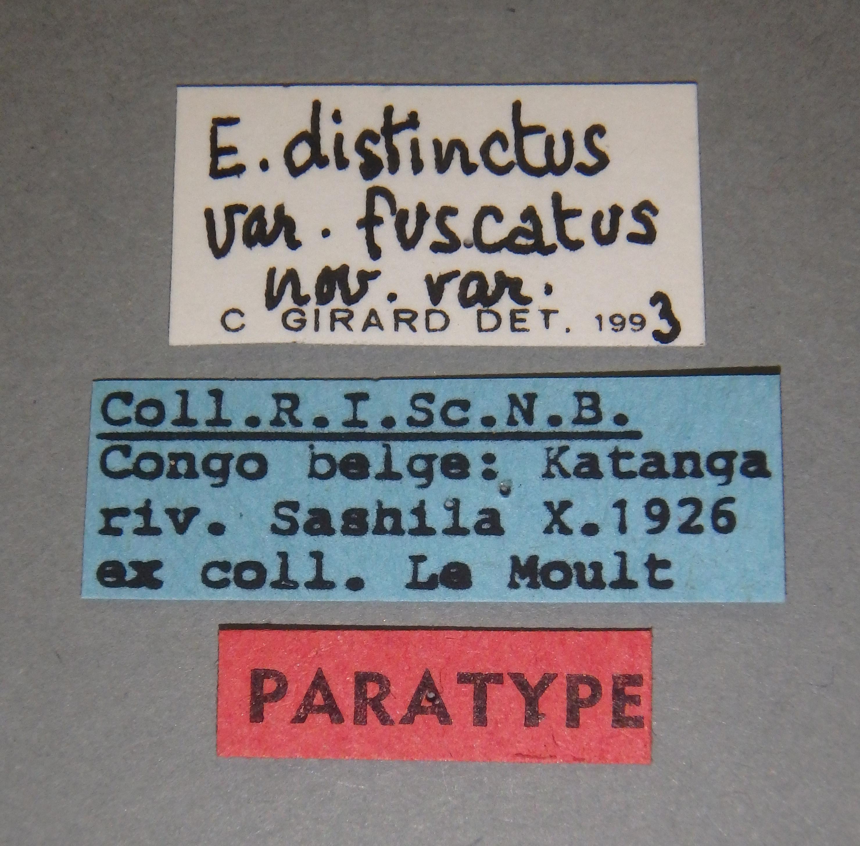 Eudicronychus distinctus var. fuscatus pt6 Lb.JPG