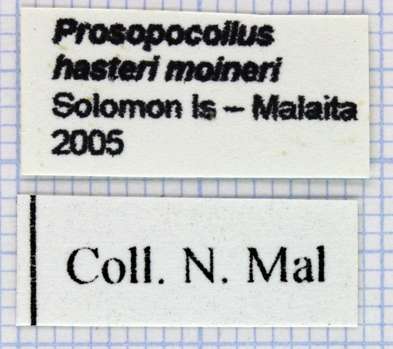 Prosopocoilus lafertei moineri 30645.jpg