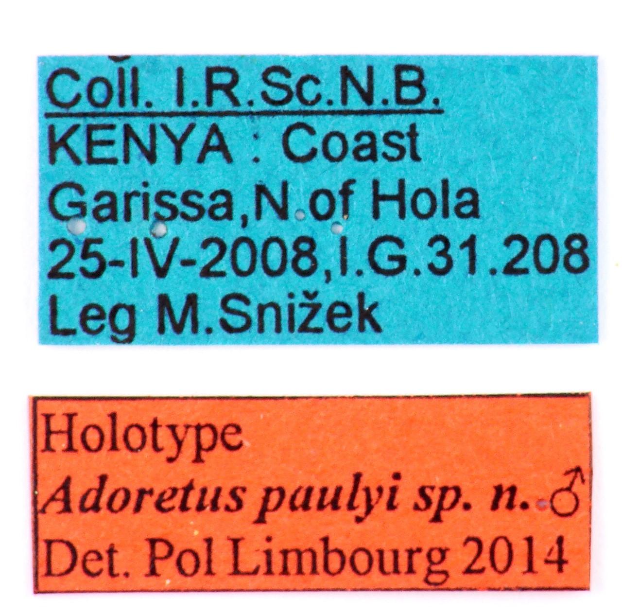 Adoretus paulyi holotype Male Labels