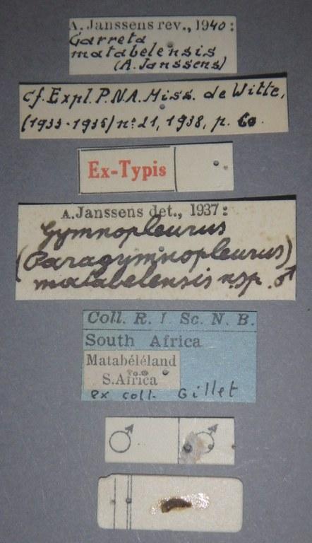 Gymnopleurus (Paragymnopleurus) matabelensis et M Lb.JPG