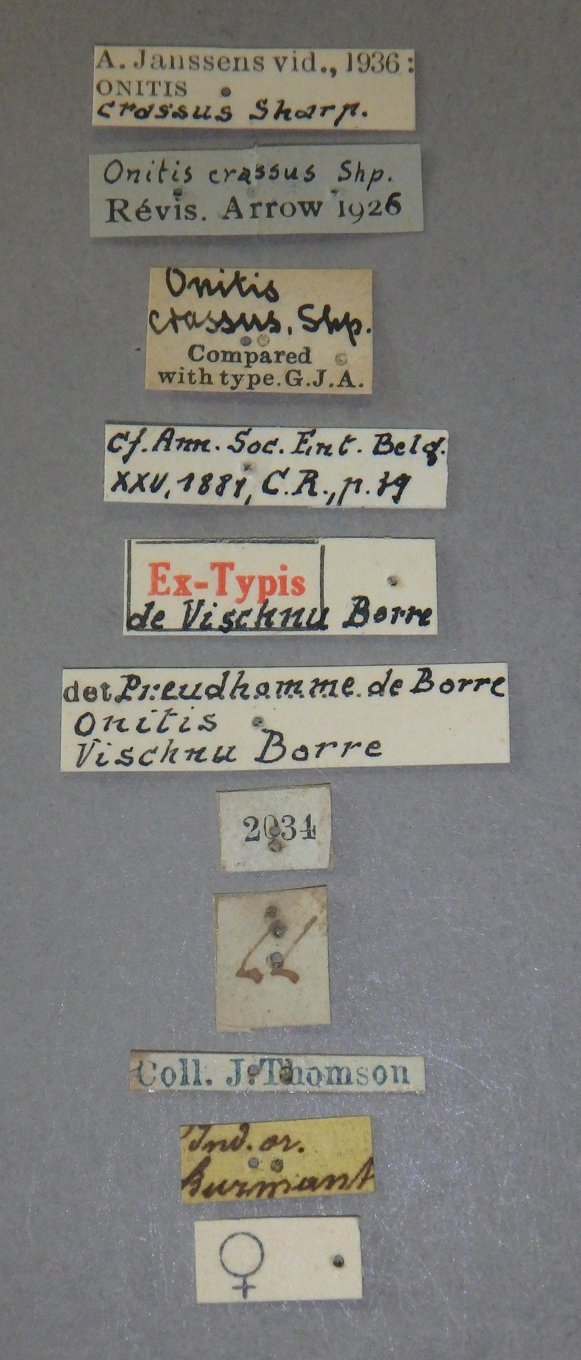 Onitis vischnu et2 Lb.jpg