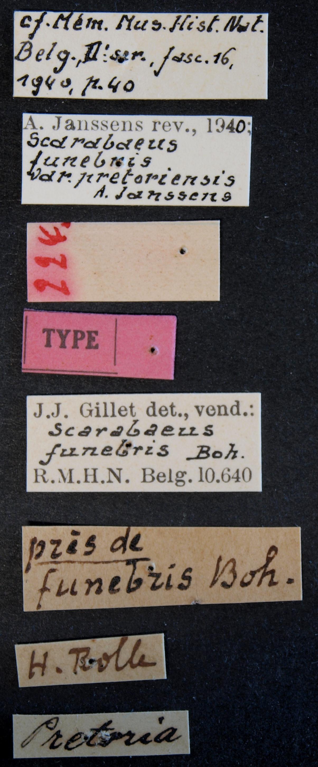 Scarabaeus funebris variety pretoriensis type Lb.JPG