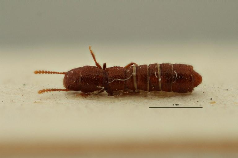 Afrotyphlopsis punctata pt D ZS PMax Scaled.jpeg