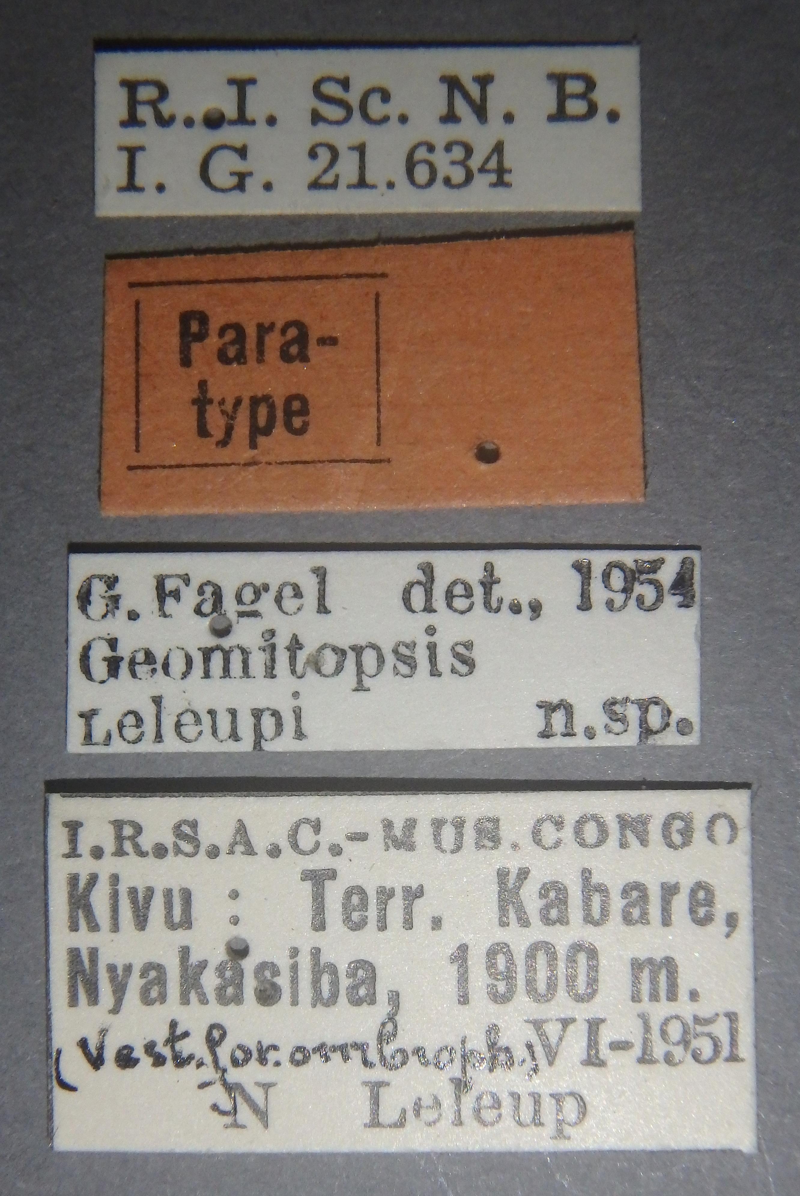 Geomitopsis leleupi pt1 Lb.JPG