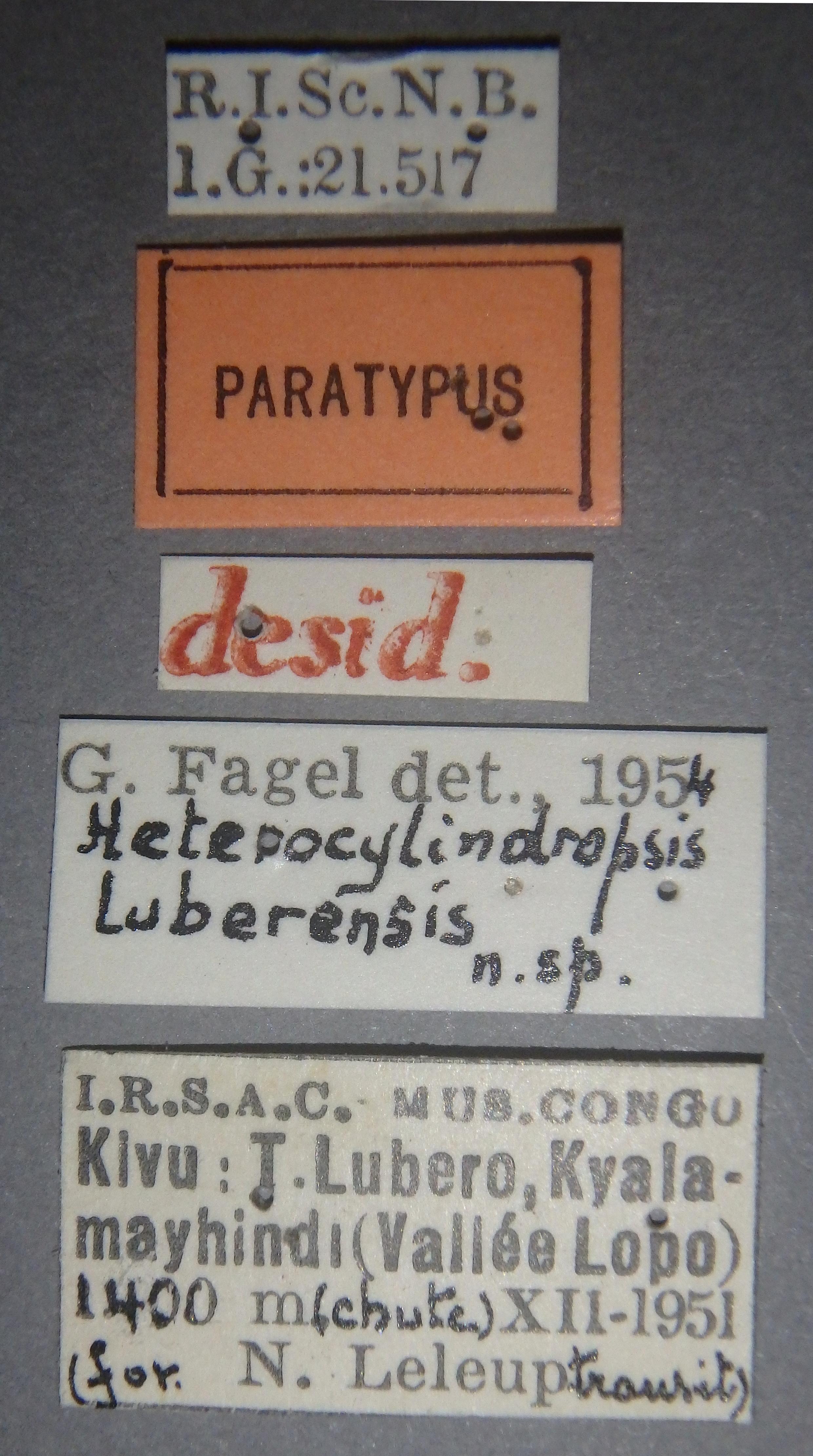 Heterocylindropsis luberensis pt Lb.JPG