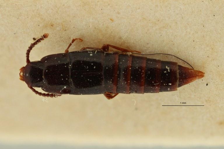 Holosus reticulatus pt D ZS PMax Scaled.jpeg